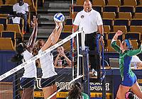 FIU Volleyball v. FGCU (10/15/13)