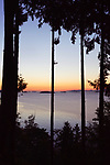 Sunset sky over the ocean nature scenery view through tall cedar trees framed by branches. Strait of Georgia, Salish Sea, Pacific Ocean in Nanaimo, Vancouver Island, BC, Canada. Image © MaximImages, License at https://www.maximimages.com
