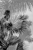 Joshua Tree NP, Film Double Exposure
