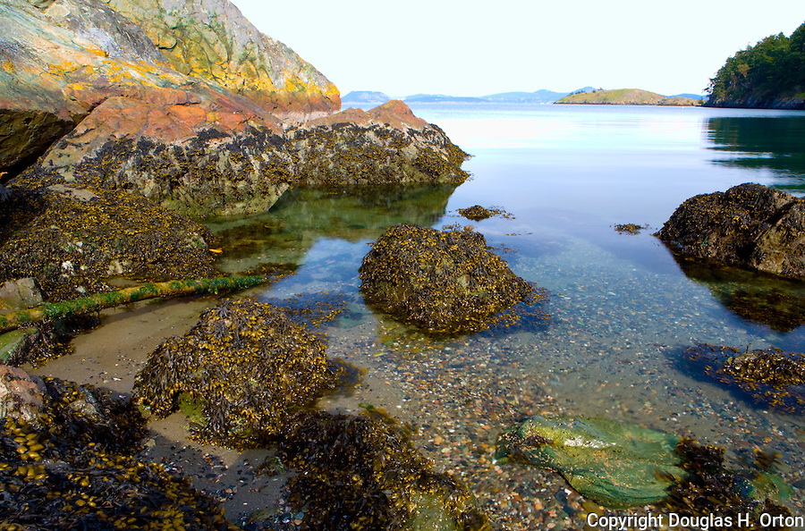 Tide pool at Watmough Bight Preserve on Lopez Island, in the San Juan Islands of Washington.  Watmough Bight is a successful preservation effort of the San Juan Preservation Trust, an active organization responsible for significant contribution to the preservation of public lands.