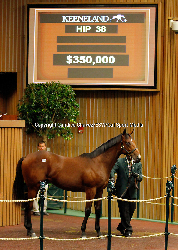September 14, 2015: Hip 38 Fastnet Rock - Wonder of Wonders colt consigned by Eaton Sales.  Candice Chavez/ESW/CSM