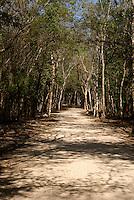 Ancient Mayan white road or Sacbe at the Mayan ruins of Coba, Quintana Roo, Mexico..