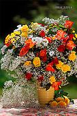 Carl, FLOWERS, photos, SWLA12014,#f# Blumen, Natur, flores, naturaleza