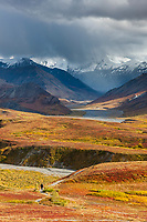 Hiker walks on a trail near Eielson visitor's center during autumn, Denali National Park, Alaska.