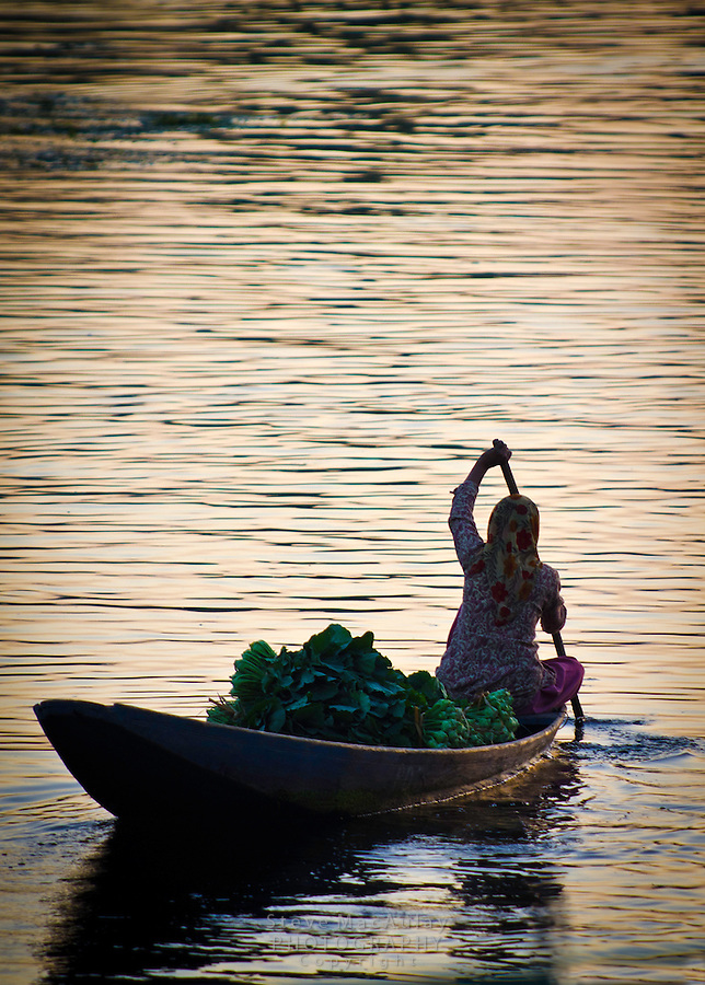 Muslim woman on a Shikara, or gondola boat, on Dal Lake, Srinagar, Kashmir, India.