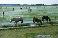 Horses grazing on an alluvial plain in Rio Grande do Sul State, south Brazil.
