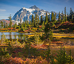Mount Baker-Snoqualmie National Forest, WA: Huckleberries and grasses in fall color at Picture Lake with afternoon sun on Mount Shuksan