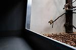 Due to a coronavirus pandemic (COVID-19), Servion Zoo is closed to the public. Servion, Switzerland, April 30, 2020.<br /> Pour cause de pandemie de coronavirus(COVID-19), le zoo de Servion est ferme au public. Servion, Suisse, le 30 avril 2020.