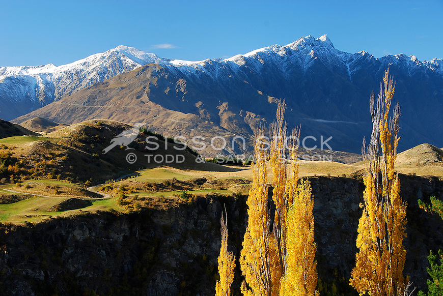 Golden Poplars in Autumn with snow capped Remarkables Mountains behind, Queenstown, New Zealand