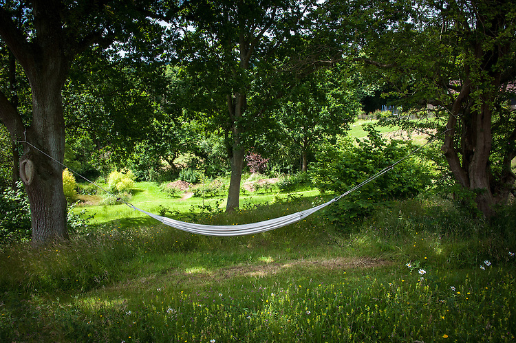 Hammock, Fairlight End, Pett, East Sussex, late June.
