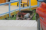 Dawson City, 2010,  Street Girl Sleeping  in Dredger Scoop,THE YUKON TERRITORY, CANADA