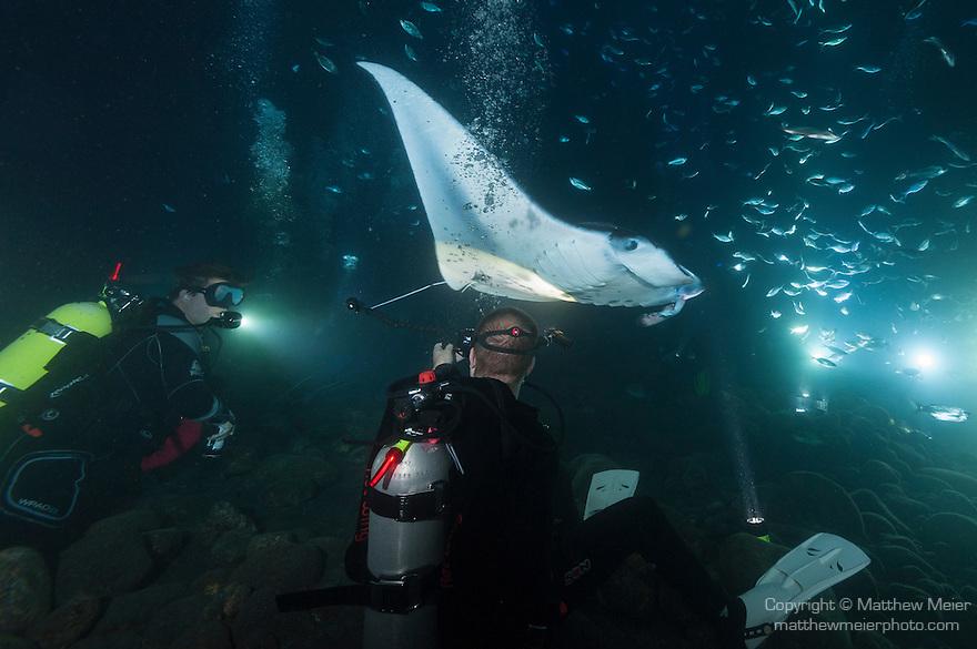 Kona, Big Island of Hawaii, Hawaii; Manta Ray night dive with Jack's Diving Locker