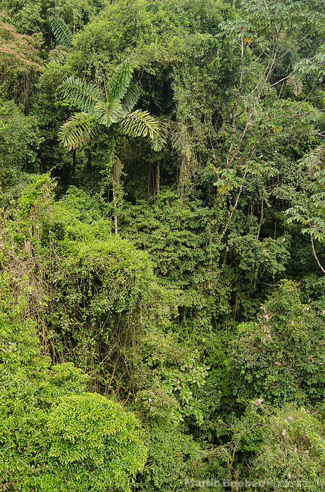 Aerial view of the rainforest canopy, near El Castillo, Costa Rica