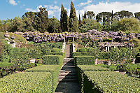The lemon garden at La Foce with its dramatic purple wisteria