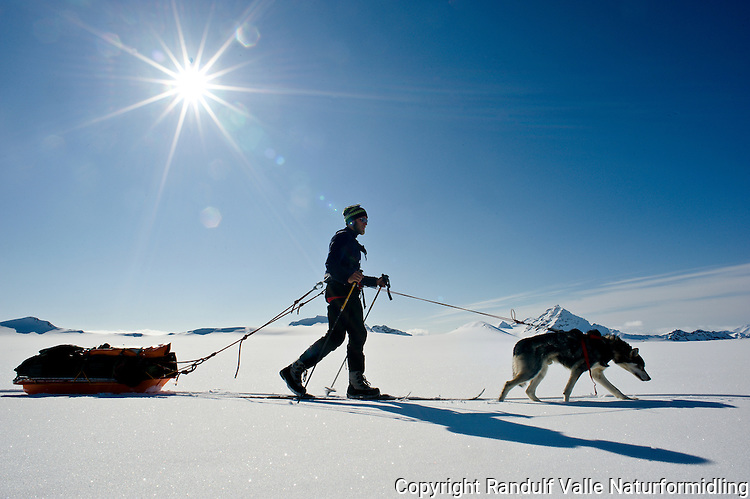 Skiløper med pulk og trekkhund på Borebreen på Svalbard. ---- Skier with sled on the glacier Borebreen, Svalbard.