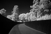 Sackler Crossing, Kew Gardens in Infrared