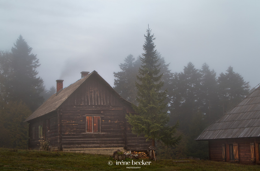 A very foggy morning on Predov Krst, Tara national Park, Serbia.