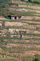 vineyard hut hermitage rhone france