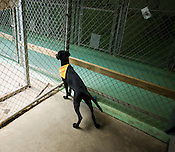 Lexie has been at the Animal Protection Society of Durham nearly all summer waiting for someone to take her home.