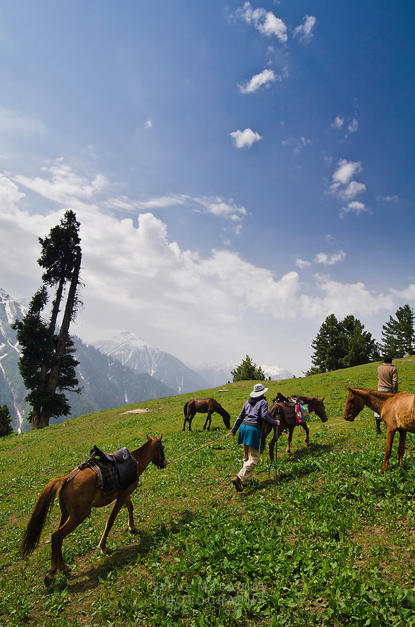 Western tourist trekker with  horses and guide in the stunning alpine wonderland above Naranag, Western Himalayan Mountains, Kashmir, India..