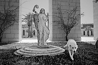 Tripoli, Libya, April 3, 2011..El Hammangi cemetery. A lone dog wanders around a broken statue in the italian part of the cemetery, rebuilt in 1951 by Caccio Domignioni.