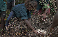 "Aboriginals collect crocodile eggs, part of their native culture.<br /> I've never hunted for crocodile eggs with aborigines before. The day before we had gathered about 140 eggs from 3 nests and the croc had slithered off before we got there.  Aborigines just use a big stick or paddle to defend themselves from charging crocodiles and the first day there were two men armed with sticks.  As we walked toward the nest I patted their shoulders and told them I was standing behind them and they had to protect me.  They monitored my movements and kept themselves between me and the nest.  The next day, however, the sticks were manned by kids and the first nest we found was empty of eggs and no longer had a croc guarding it.  When we came up on the second nest the boat ran up against a log and we all had to jump out into the water to get to land.  Carrying cameras always puts you a couple of steps behind everyone else.  When I jumped into the water, the kids with sticks were already a couple of yards in front of me.  The only thing I really remember after that is seeing this huge gaping mouth of a crocodile coming right at me.  I knew they could run fast but I remember thinking ""how do they see where they're going with all those teeth lifted up in front of their eyeballs?""  The boys were far enough ahead that they could run to the right.  The crazed animal only had one brain loop operating at that moment... It wanted to get to the water... I was still in the watery rut at the edge of the river and the only thing in its way.  I only had two options: jaws or water.  In panic mode, I chose the water option and the real fear came about one second later realizing I am in water with an angry crocodile.  There is some discrepancy about the size of the crocodile.  Rule of thumb is that an 8 foot crocodile can take a man if they are both in the water.  Estimates from 3 witnesses vary from 7 to 10 feet."