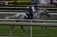 California Flag working on the turf for trainer Brian Koriner at Santa Anita Park in Arcadia California