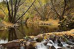 Idaho, South central, Twin Falls, rock Creek.  Fallen leaves line the shore of Rock Creek in autumn.