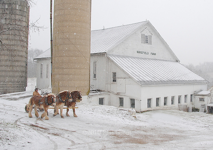 """Looking like a scene from the 19th Century, Joe Gerald of Taneytown.drives a team of three Belgian draft horses through a snow storm.past the 190-year-old bank barn of Charlie and Ruth Shriver's near.New Windsor.  Charlie bought Wakefield Farm in 1958 as a dairy farm,.always using """"draft horsepower"""" to do all the pulling.  It turns out that.Joe's father, William, was the foreman of Charlie's grandfather, George.M. Shriver, who owned a large dairy farm near Pikesville.  George.was aso vice president of the B & O Railroad."""