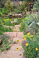 A flagstone path leading to a lower level pond provides a reference for plantings of yuccas, iris, poppies, Gaillardias and many other plants in Dan Johnson's Denver garden.