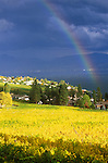 N.A., Canada, British Columbia, Okanagan Valley, Rainbow over Vineyard