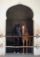 young Marwari horses in their stable at Ravla Khempur