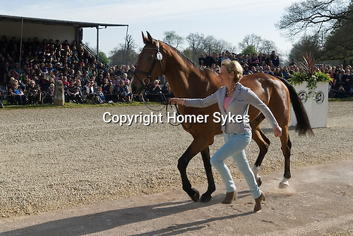 Mary King Imperial Cavalier Badminton Horse Trials Gloucestershire UK. Vets final inspection.
