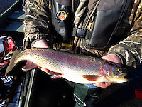 NWA Democrat-Gazette/FLIP PUTTHOFF<br /> This 17-inch rainbow trout bit a black jig during a float trip in December 2014 on the White River below Beaver Dam. The 7-mile tailwater is a haven for paddling, fishing or both any season of the year.