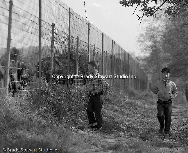South Park PA:  Patrick and Timothy Stewart visiting the buffalos in South Park - 1965