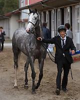 15 April 2012: Gold Ship wins the 72nd Satsuki Sho at Nakayama Racecourse on April 15th, 2012.