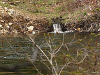 A creek flows into the South Yuba River at Cisco Grove Gould Park creating a tiny spring waterfall.