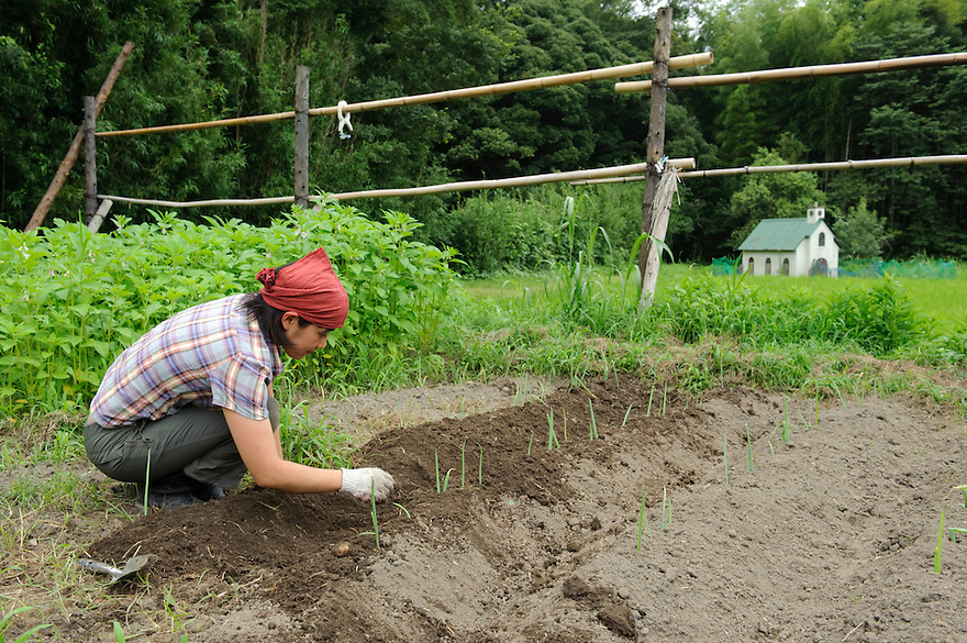 A staff member tends a vegetable patch at Brown's Field, Isumi, Chiba Prefecture, Japan, August 8, 2009.The organic farm introduces healthy and sustainable living in the Japanese countryside. It is staffed by the Brown family and volunteers from around the world.