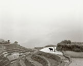 CHINA, Longsheng, farmer and water buffalo plough the Dragon Backbone Rice Terraces (B&W)