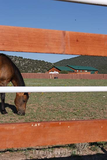 Westcliffe - . Wednesday, July 30, 2008. horse and home