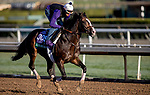 October 30, 2019: Breeders' Cup Turf entrant Bricks and Mortar, trained by Chad C. Brown, exercises in preparation for the Breeders' Cup World Championships at Santa Anita Park in Arcadia, California on October 30, 2019. Carolyn Simancik/Eclipse Sportswire/Breeders' Cup/CSM