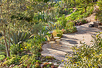 Morning light in Debra Lee Baldwin Southern California backyard cactus and succulent garden with patio