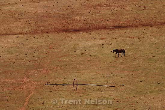 horses, cows, livestock<br />