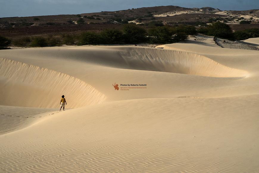 Typical Boa Vista landscape