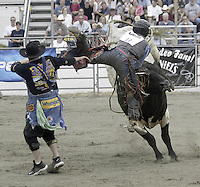 29 August 2004: Bull Rider Jarrod Ford 18th ranked in the world gets tossed by the bull Spin Drift during the PRCA 2004 Extreme Bulls competition in Bremerton, WA.