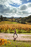 USA, California, Sonoma, Kit Paquin walks through a majestic vineyard landscape in the fall, Ravenswood winery and vineyard