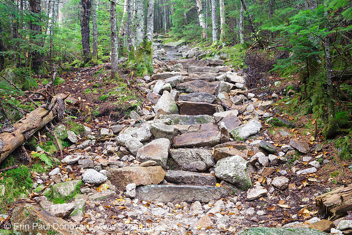 September 2014 - Stone staircase along Mt Tecumseh Trail in Waterville Valley, New Hampshire during the summer months. A herd path has formed on the left side of the steps from hikers avoiding (not using) the steps. Herd paths are a common problem along trails, and if they are not blocked, they can create more trail erosion issues. When this image was taken, this staircase was only a few years old.