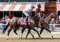 Firenze Fire in the post parade as Promises Fulfilled (no. 1) wins the Allen Jerkens  Stakes (Grade 1), Aug. 25, 2018 at the Saratoga Race Course, Saratoga Springs, NY.  Ridden by  Luis Saez, and trained by Dale Romans, Promises Fulfilled finished 1 1/4 lengths in front of Seven Trumpets (No. 5).  (Bruce Dudek/Eclipse Sportswire)