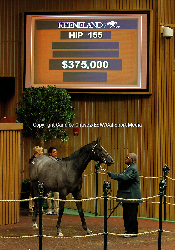 September 14, 2015: STORM TAP  Hip 155 Tapit - Cat Myth colt consigned by Timber Town. Candice Chavez/ESW/CSM