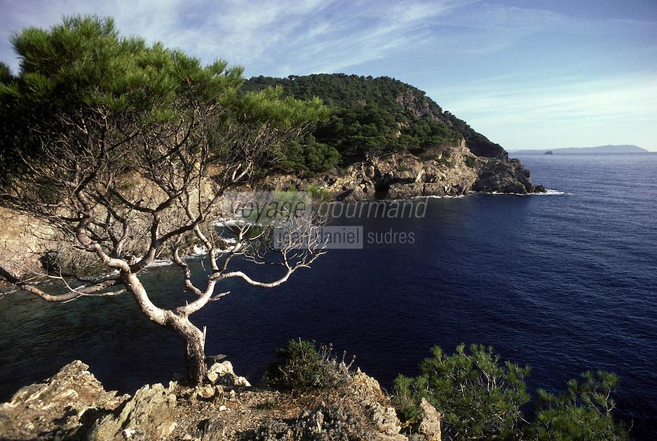 Europe/France/Provence-Alpes-Côte d'Azur/83/Var/Ile de Porquerolles: La calanque de l'Oustaou-de-Diou